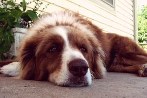 Hundebox Bestseller